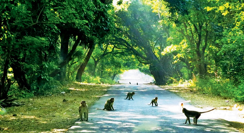 Sanjay Gandhi National Park -car rental in pune